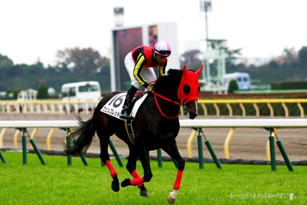 ウェルブレッド 2015 東京競馬場