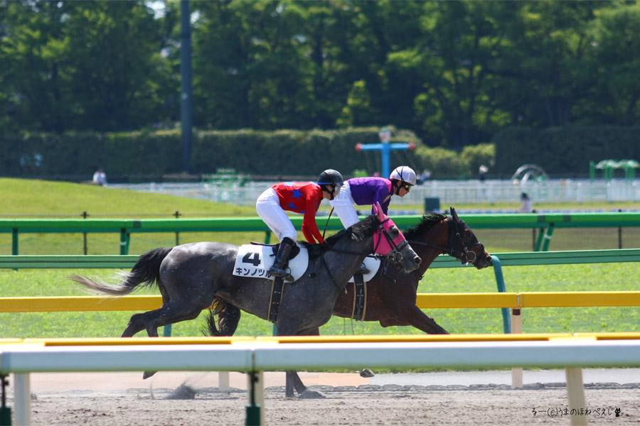 キンノツル 2016 東京競馬場