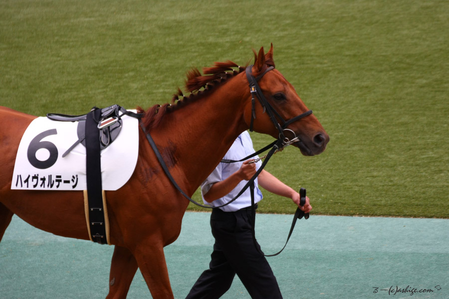 ハイヴォルテージ 2016 東京競馬場