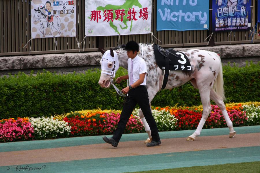 ブチコ 2016 東京競馬場