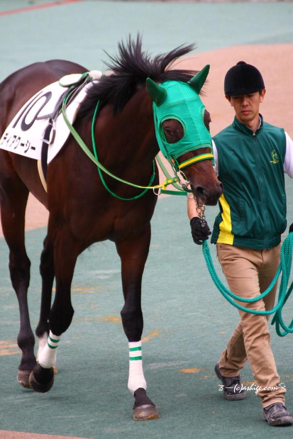 ディアクーシー 2016 東京競馬場