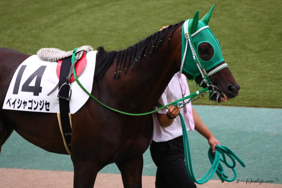 ペイシャゴンジュセ 2016 東京競馬場